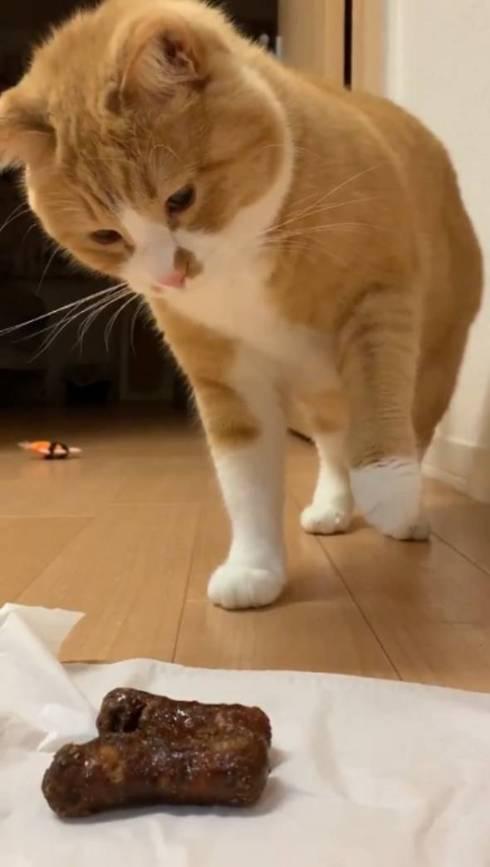 猫 ドン引き かりんとう さんて君