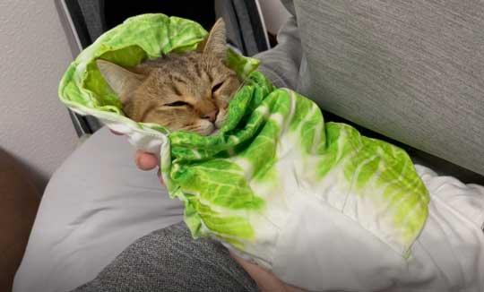 白菜 おくるみ 猫 手作り かわいい 赤ちゃん ミヌエット みにら