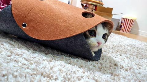 穴あきトンネルも大好きなピノくん