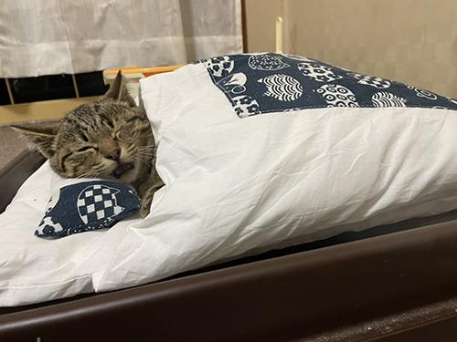 お布団で寝るしめじくん目閉じ