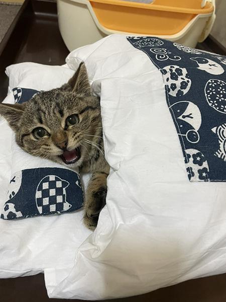 お布団で寝るしめじくん目開け