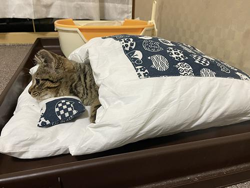 お布団で寝てテレビを見るしめじくん
