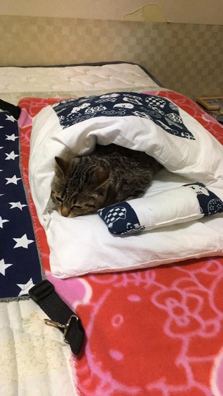 赤いブランケットの上にあるお布団で寝るしめじくん