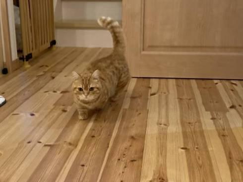 猫 ちょみーちゃん 足ピーン