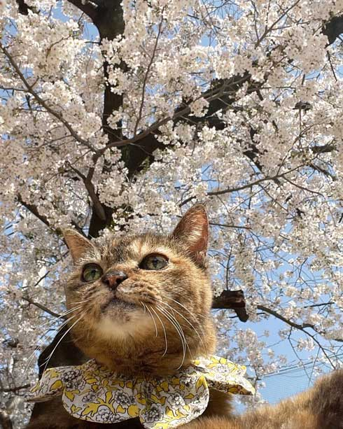 21歳 猫 モコ 誕生日 百寿 保護猫