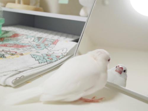 鏡を見つめるるりくん