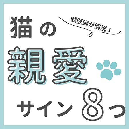 猫の親愛のサイン8つ-.1