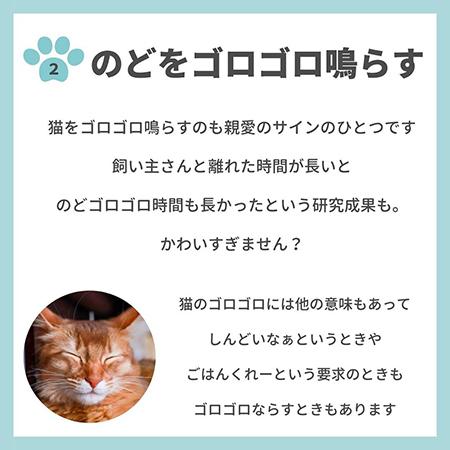 猫の親愛のサイン8つ-.3