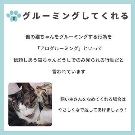 猫の親愛のサイン8つ-.4