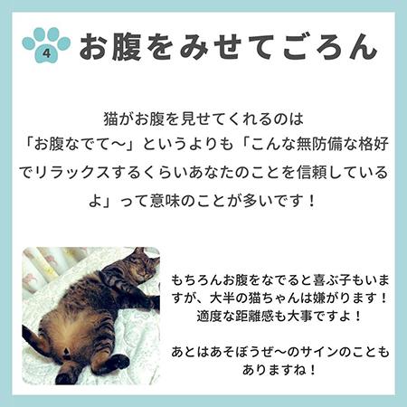 猫の親愛のサイン8つ-.5