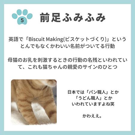 猫の親愛のサイン8つ-.6