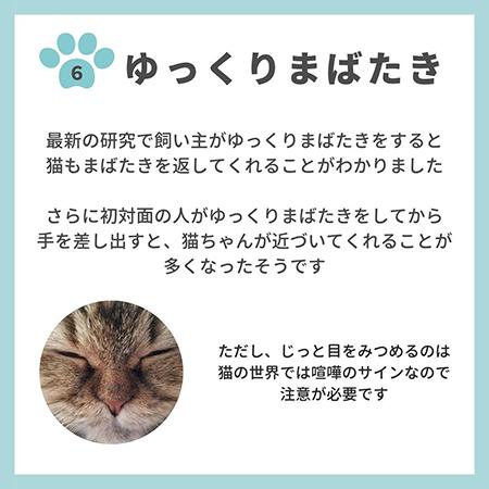 猫の親愛のサイン8つ-.7