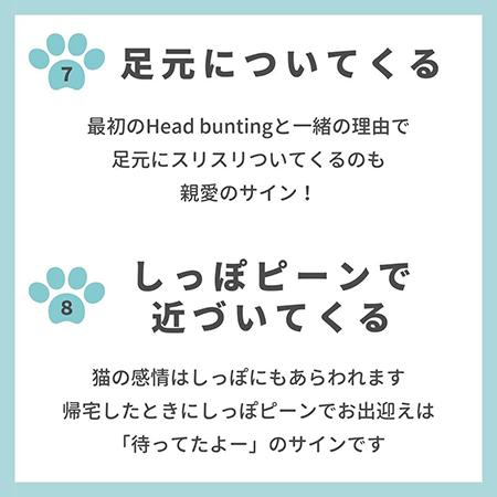 猫の親愛のサイン8つ-.8