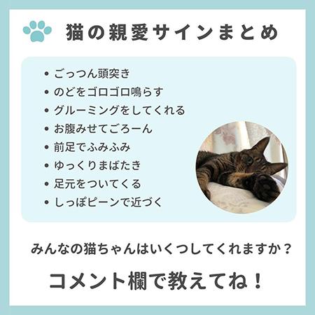 猫の親愛のサイン8つ-.9