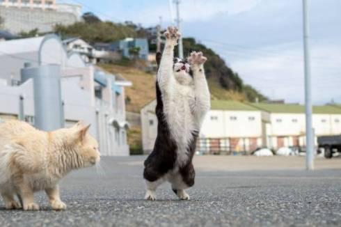 猫 オトモアイルー のら猫拳 久方広之