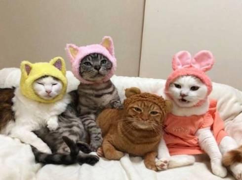 猫 かぶりもの イースター