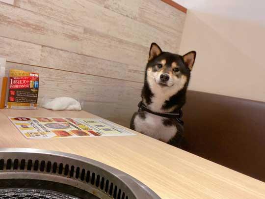 琥大朗 犬用 焼肉セット 黒柴 表情 変化 うしすけ