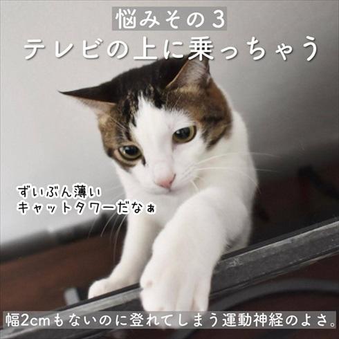 猫イタズラ対策
