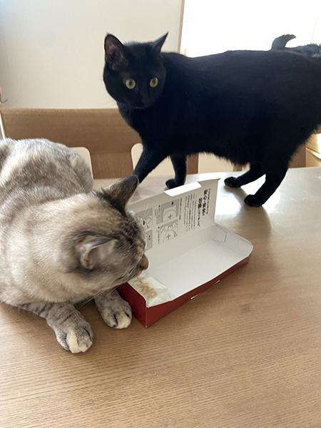 箱とビスコさんチョコさん