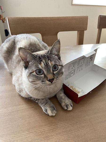 ビスコさん箱の横