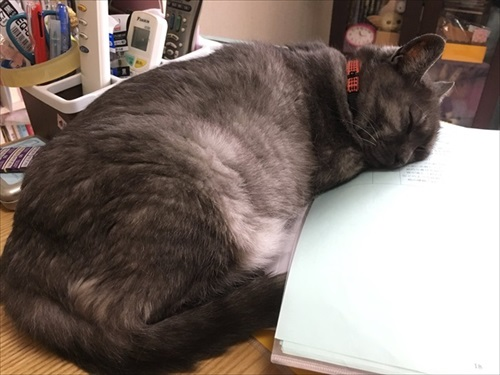 猫ちゃんのビフォーアフター