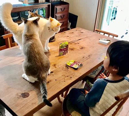 猫パンチ寸前