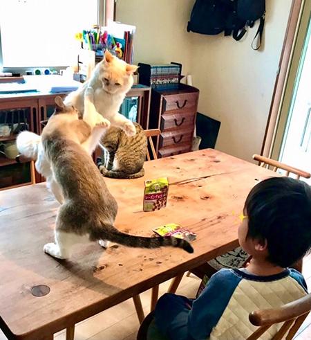 猫パンチ炸裂その後