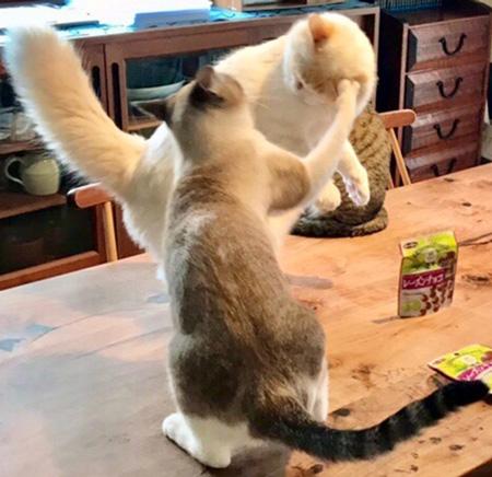 猫パンチ炸裂アップ