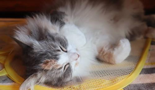 洗濯カゴはネコちゃんのもの