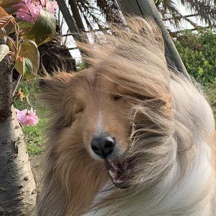 風の中のさくらちゃん