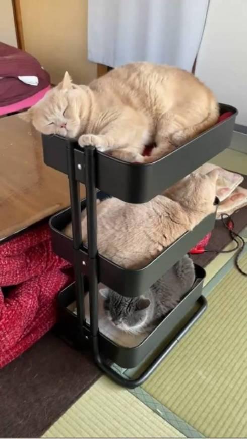 猫 IKEAのワゴン くつろぐネコ