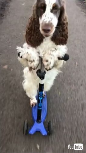Goes Scooting