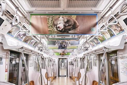マウントレーニア動物園コラボ