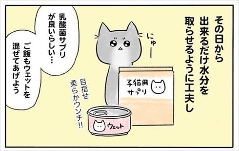 少食な猫ちゃん