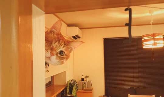 猫 豆苗 隠しておいた 見つかった 盗み食い