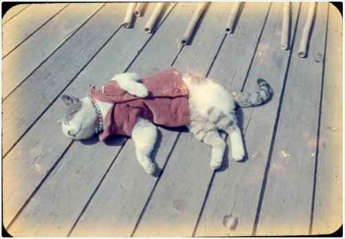南極へ行った猫 たけし