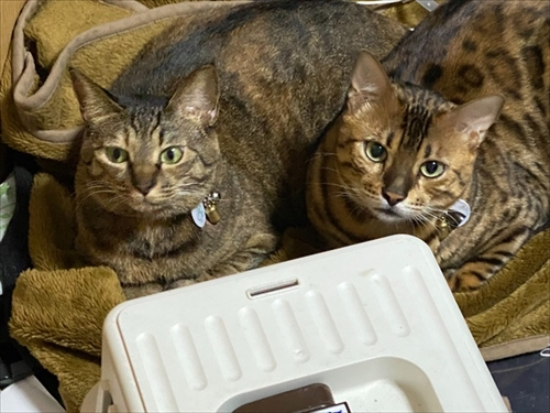 猫ちゃんの機嫌の取り方