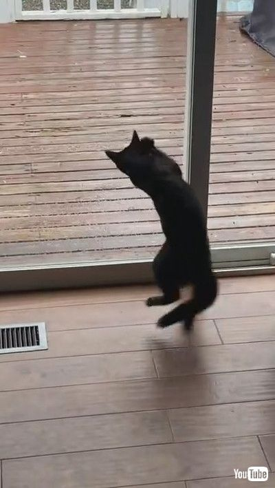 「Kitten Doesn't Understand Glass Yet    ViralHog」