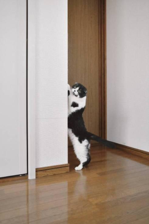 猫 お水出して