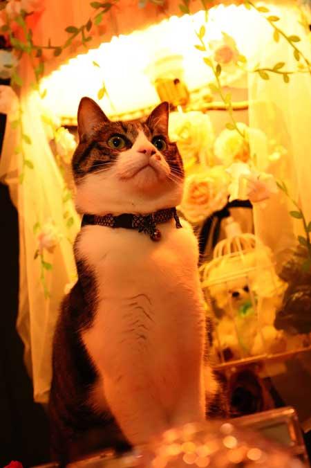 コスプレスタジオ 我が物顔 堂々 猫 乱入