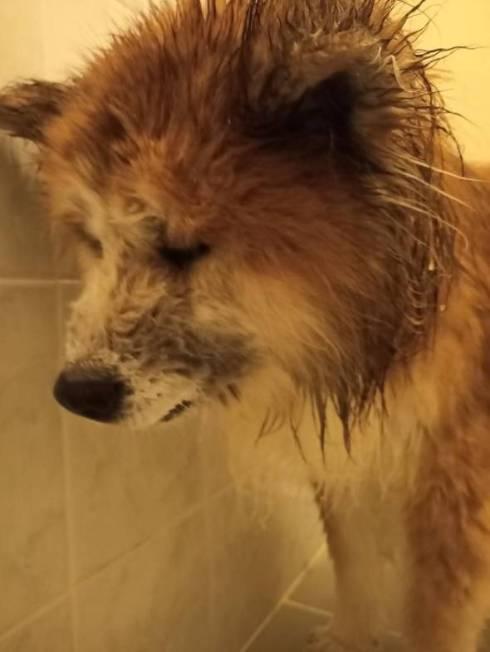 飼い主さん 犬さん シャワー 目を合わせてくれない
