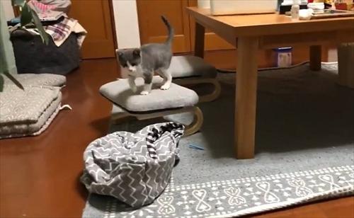 お迎え初日から元気な猫ちゃん
