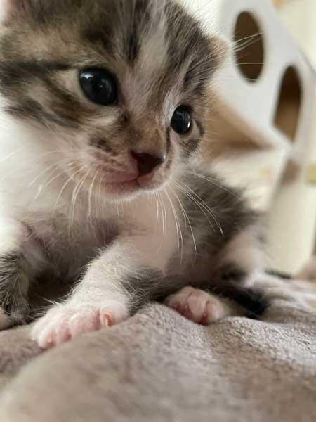 子猫 見守る 先住猫 見守り隊 寝顔 保護猫