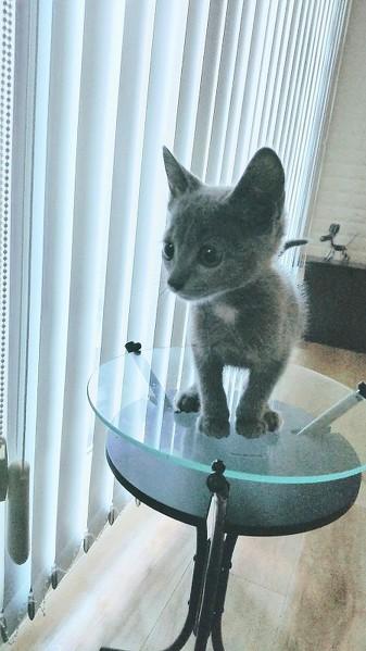 猫かわいい