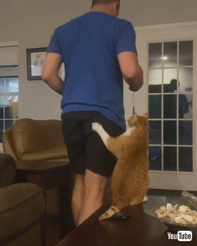「Feisty Cat Gets Handsy    ViralHog」