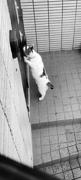 ドロボウ猫