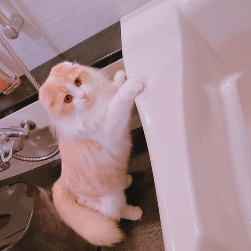子猫かわいい