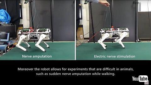 猫ロボット