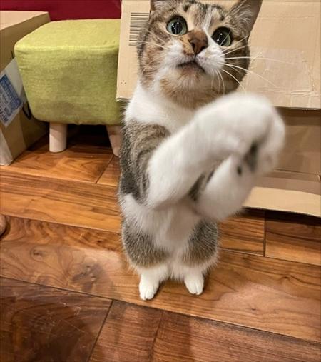 カゴに入る猫ちゃん