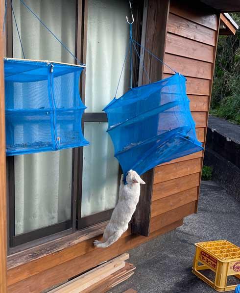 良い天気 魚 干物 干し網 助けて 野良猫